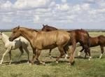 Centre Equestre le Mas di Gau